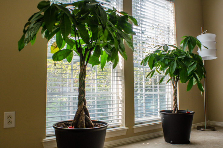 Taking Care Of The Air With Houseplants